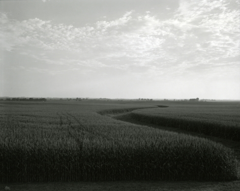Untitled, from Illinois Landscapes, 2009, gelatin silver contact print, 8 x 10 inches