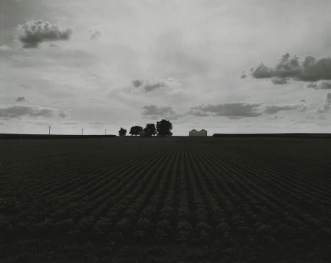 Untitled, from Farm Landscapes, 2009, gelatin silver contact print, 8 x 10 inches