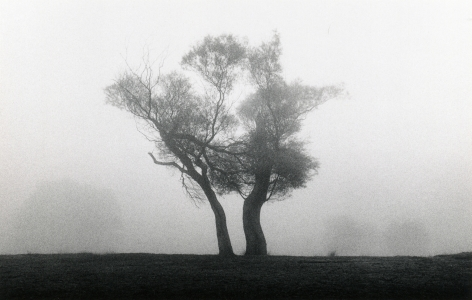Two Trees, Richmond Park, Surrey, England, 1979