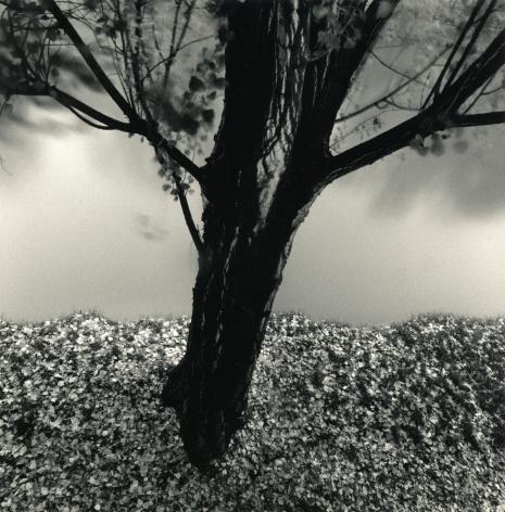 River Willow, Study 2, Strasbourg, France, 1993