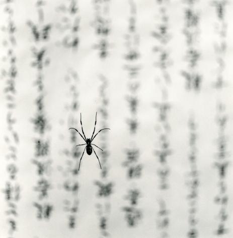 Spider and Sacred Text, Study 1, Gokuraku Temple, Shukoku, Japan, 2001