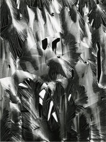 Brett Weston, Plastic