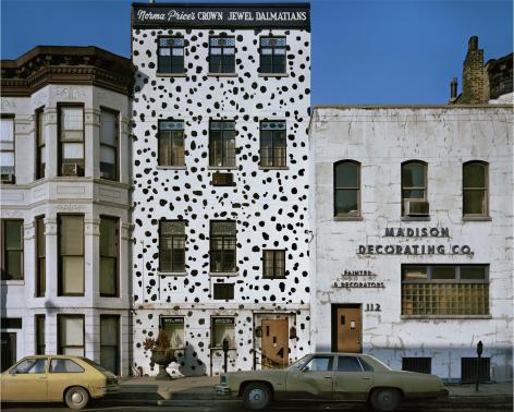 Dalmations, Chicago, 1976, digital chromogenic print