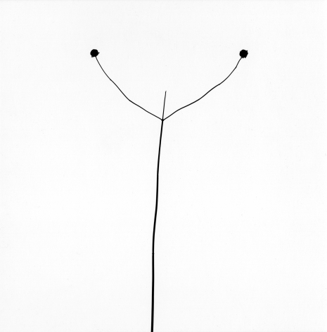 Harry Callahan, Weed Against Sky, Detroit