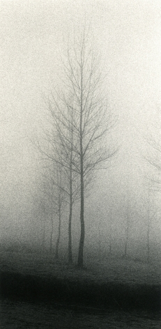 Tree, Minster Lovell, Oxfordshire, England, 1983