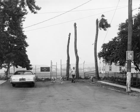 Man Walking Dalmations, 1983-84
