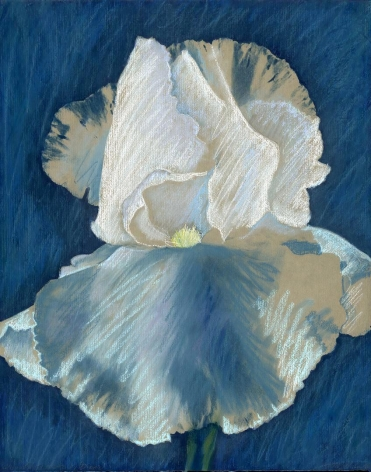 Iris with Soft Pastel #1