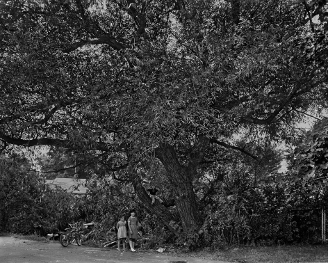 Children Playing in a Willow Tree, 1983-84