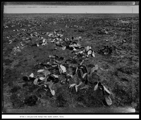 After a 300,000-Acre Range Fire, Near Albany, Texas, 1988, vintage gelatin silver print