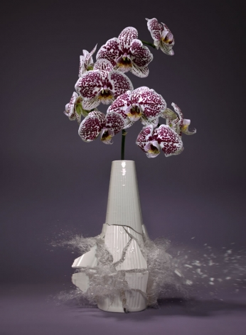 Martin Klimas, Orchidaceae X, 2019