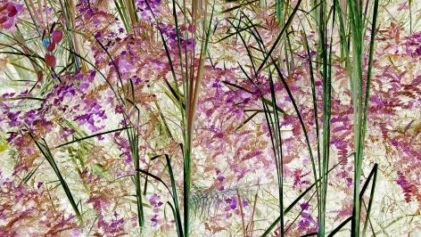 "Analog v. Digital, Irene Imfeld - ""Flora 0066"", 2017"