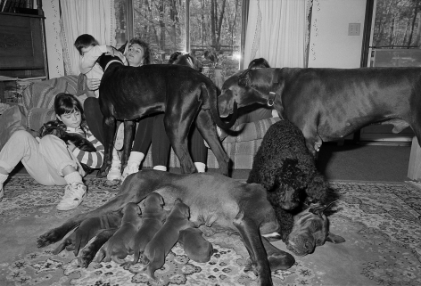 Family with Great Danes and Poodle, Blackstone, Massachusetts - 1991