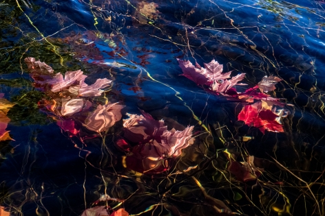 Sage Sohier, Nymphaea 16 (submerged red maple leaves/reflected blue sky), 2018
