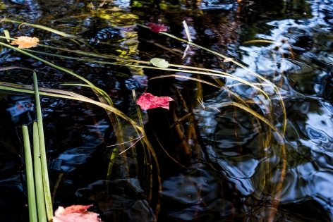 Sage Sohier, Nymphaea 5 (red leaf floating between grasses/blue sky reflection), 2018