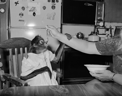 Monkey being fed in high chair, Raymond, New Hampshire - 1993