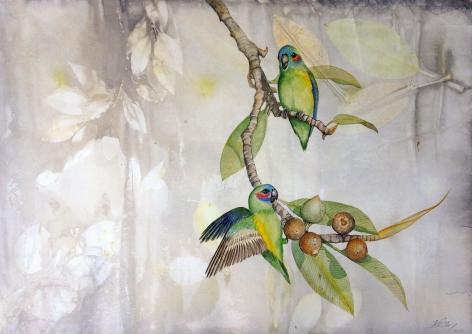 Anne Leon Coxen's Fig-Parrot Watercolour on Plant-dyed paper 2016
