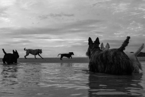 Rob Scott-Mitchell Exhibition Lone Goat Gallery Byron Bay