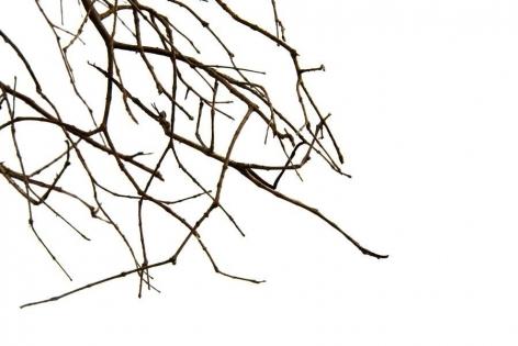 Maria Fernanda Cardoso, Little Stick, Edition 2/3, 2010.  Archival pigment print on 300g watercolor paper, 15 3/4 x 23 5/8 in.