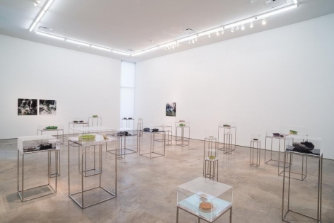 Ana Maria Tavares, Euryale Amazonica, Installation view, 2014.