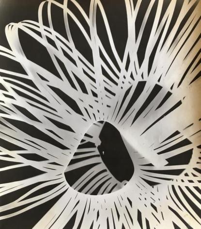 Fotograma, 1964. Photogram. 11 7/32 x 12 31/32 in. (28.5 x 33 cm.)