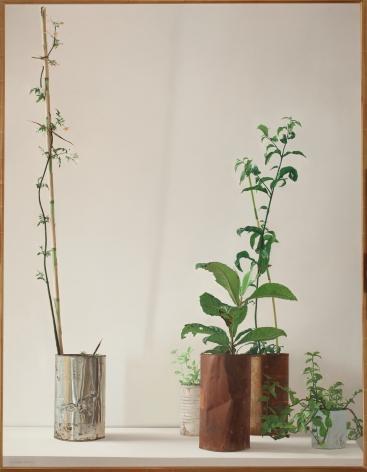 Claudio Bravo, Plants, 1972. Oil on canvas, 56 1/2 x 43 3/4 in.