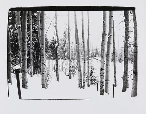 Trees, Aspen.