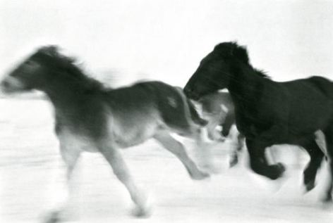 Horses #1, 2005-2006