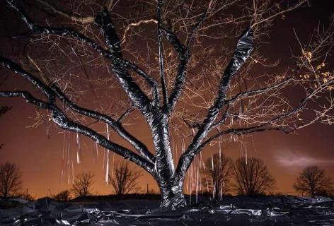 David Soffa, Picturing the Read #5 (Tree), 2014