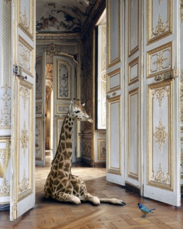 The Grand Monkey Room (3), 2006, 	26 x 30 inch pigment print
