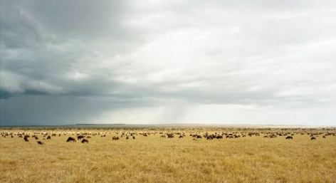 "Masai Mara I, From the series Horizons, 2009, 	12 x 22"" C-Print"