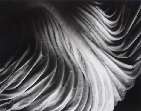 Cabbage Leaf, 1931.