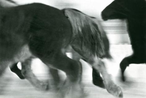 Horses #2, 2005-2006