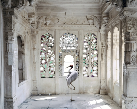 A Place Like Amravati, Udiapur Palace, Udaipur 2, 2011, Archival pigment print