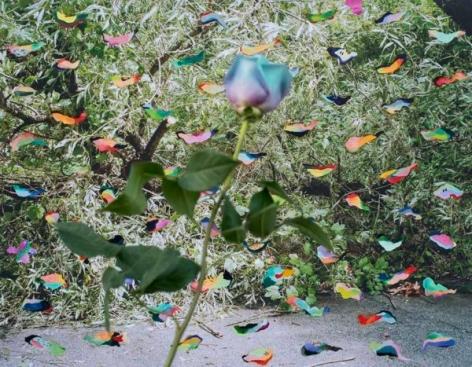 Ye Weon Mary Kim, Blue Rose, 2016