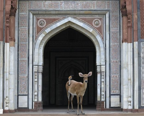 The Messenger, Purana Quila, New Delhi.