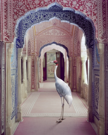 A Faithful Companion, Samode Palace, 2020, 30 x 23.5 inch pigment print - Edition of 5