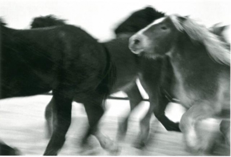 Horses #6, 2005-2006