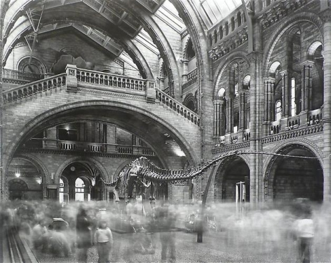 Matthew Pillsbury. Wyoming Diplodocus Natural History Museum, London 2007