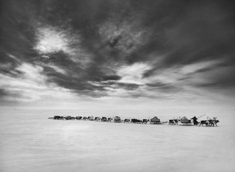 Nenet Nomads (Migration of Camp) South Yamal Region, Siberia, Russia. 2011