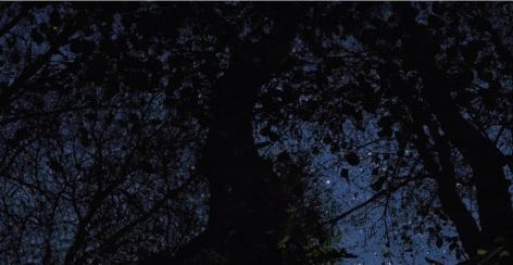 Star Field Alder, 2011, 40 x 77 inch digital c-print-Edition of 3