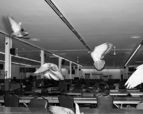 Eli Durst, Birds, 2016