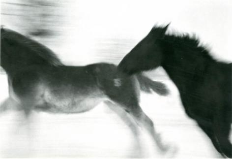 Horses #5, 2005-2006