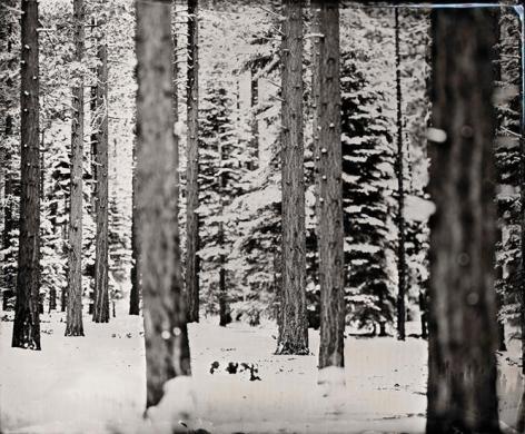 Snow Trees, 2011