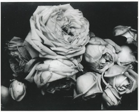 Edward Steichen. Heavy Roses, France. 1914.