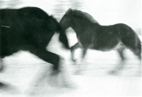 Horses #4, 2005-2006