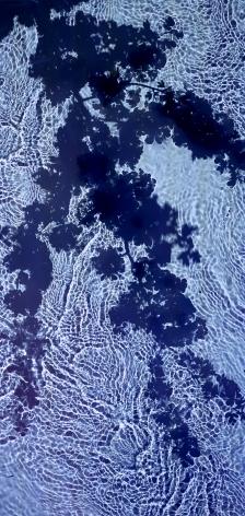 River Taw Hawthorn, 2020, 51 x 24 inch fujicolor crystal archive print