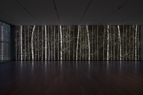Jennifer Steinkamp: Blind Eye, Installation view, The Clark Art Institute, Williamstown, MA