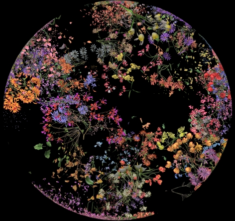 珍妮弗·æ–½æ³°æ©åŽæ™® Botanic 2(film still), 2015