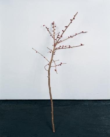 ANYA GALLACCIO, it must give pleasure, 2001