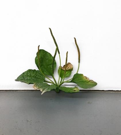 Tony Matelli Weed #334, 2014